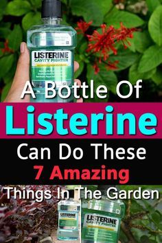 A Bottle Of Listerine Can Do These 7 Amazing Things In The Garden Not only to protect your teeth, you can also use mouthwash to protect your garden. Find out 7 amazing Listerine Uses in the Garden! Garden Pests, Garden Tools, Garden Shrubs, Garden Trowel, Garden Supplies, Garden Ideas, Hosta Gardens, Garden Projects, Garden Insects