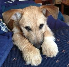 My dog Baxter. Nancy, Merrimack, NH. 3/23/14.