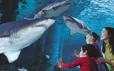 A Cattolica con bambini tra spiaggia, squali, tartarughe e pipistrelli… http://www.familygo.eu/viaggiare_con_i_bambini/emilia-romagna/cattolica-bambini-mare-acquario.html