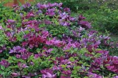 Planters, Bruges, Outdoor Ideas, Flowers, Garden Ideas, Gardens, Tips, Outdoor Gardens, Plant
