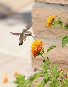Butterfly & Hummingbird Gardens