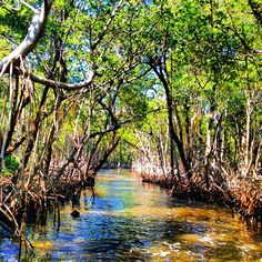 """Everglades, Florida - US - Part prairie, part jungle, and part flowing water, Florida's """"river of grass"""" is an unmatched paradise."""