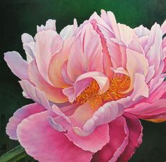 peony watercolor painting - Google Search                                                                                                                                                     More