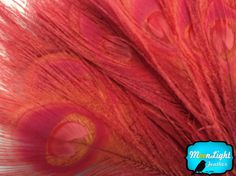 Peacock Feathers 50 Pieces Wholesale RED by MoonlightFeatherInc