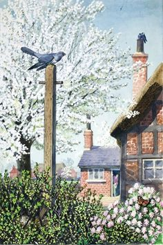 'Cuckoo and Cherry Tree' by Charles F Tunnicliffe from 'What to Look For In Spring', 1961 (Ladybird) Children's Book Illustration, Book Illustrations, Ladybird Books, Spring Pictures, Nature Artists, Cozy Cottage, Bird Art, Natural History, Pet Birds