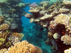 An underwater shot of the Great Barrier Reef in the Coral Sea off the coast of Australia. Going to experience this for myself soon! Cairns Australia, Coast Australia, Western Australia, Great Barrier Reef, Voyage Reunion, Beau Site, Ocean Life, Ocean Art, Science And Nature