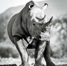 Beautiful creatures.  Image via @gerryvanderwalt on Instagram.