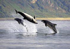 Biologist Develops Method for Monitoring Shipping Noise in Dolphin Habitat