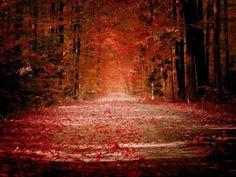BOSQUE DE ROJO Bosque de rojo engalanado. Encaje de fuego volando. Arrullo de pasión besando. Brisa de seda plega...