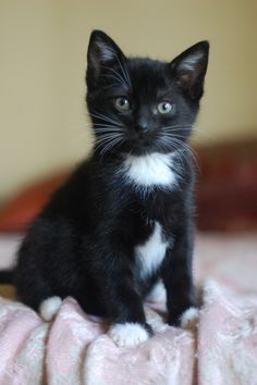 Can Cats Eat Chocolate Key: 6505637605 Kittens And Puppies, Cute Cats And Kittens, Baby Cats, Kittens Cutest, Pretty Cats, Beautiful Cats, Animals Beautiful, Cute Funny Animals, Cute Baby Animals