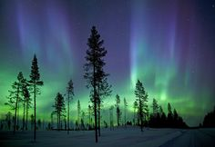 trees with kiruna aurora, sweden, by Antony Spencer