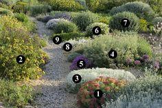 1 : Euphorbia rigida 2 : Phlomis bourgaei 3 : Cerastium candidissimum 4 : Senecio vira-vira 5 : Dianthus corsicus 6 : Salvia officinalis 'Albiflora' 7 : Ballota hirsuta 8 : Achillea umbellata 9 : Euphorbia myrsinites