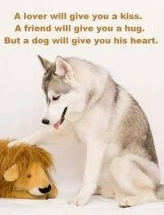 I just love dogs. Animal Lover Quotes, Dog Quotes, Lovers Quotes, Dog Sayings, Cute Puppies, Cute Dogs, Dogs And Puppies, Doggies, Awesome Dogs
