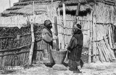 1920's. Two Ainu women using a traditional Ainu mortar (nisu), made from a hollowed-out sugi (cryptomeria) log. It was used for threshing millet (later replaced by rice), wheat, and roots, as well as for beating grains into flour and paste.