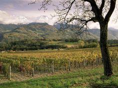 Vineyards Near Chambery, Savoie, Rhone Alpes, France