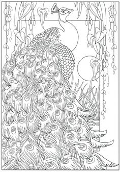 Peacock Coloring Pages For Kids from Animal Coloring Pages category. Printable coloring sheets for kids that you can print and color. Check out our series and printing the coloring sheets free of charge. Adult Coloring Book Pages, Animal Coloring Pages, Coloring Pages To Print, Printable Coloring Pages, Colouring Pages, Free Coloring, Coloring Sheets, Peacock Coloring Pages, Mandala Coloring