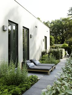 Clean outdoor space with contemporary planting layout