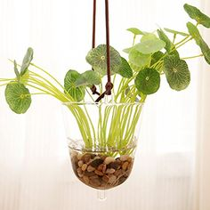 Mkono Hanging Glass Planter Vase Flower Plant Pot Container Terrarium Planter Home Decoration