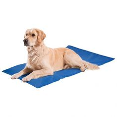 Karlie Flamingo 513866 Fresk Cooling Mat for Dogs 50 X 90 Cm for sale online Cheap Dog Beds, Bed Images, Orthopedic Dog Bed, Puppy Care, Dog Owners, Pet Supplies, Flamingo, Labrador Retriever, Puppies