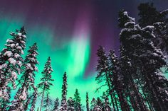 Beautiful picture of massive multicolored green vibrant Aurora Borealis, Aurora Polaris, also know as Northern Lights in the night sky over winter Lapland landscape, Norway, Scandinavia Northern Lights Viewing, Northern Lights Iceland, See The Northern Lights, Northern Lights Tattoo, Alaska, Aurora Borealis, National Geographic Expeditions, Light Pollution, Tromso
