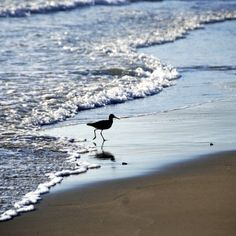 Willets in the surf, Santa Barbara – Greeting Card Santa Barbara, Soap Making, Surfing, Greeting Cards, Beautiful, Surf, Surfs Up, Surfs