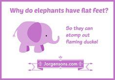 12 best elephant jokes images on pinterest dumb jokes elephants