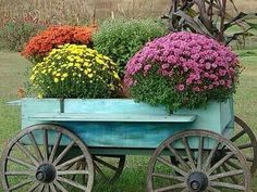 """GOING TO DO A CHRISTMAS TWIST OF THIS WITH A BUNCH OF ROSEMARY """"trees"""" inside the red radio flyer wagon!"""