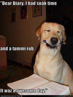persuasive essay puppy mills