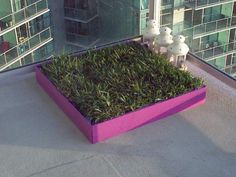 Do it yourself project: Doggy Grass Box
