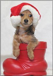 Santa's little furry helper