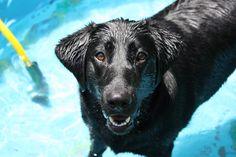 Bella havin fun in her pool