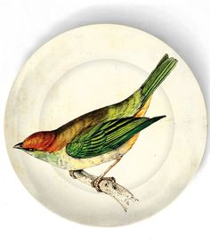 Tanager - bird artwork - on 10 inch Melamine Plate with a softly aged off-white background via Etsy Bird Artwork, Vintage Artwork, Cool Artwork, Vintage Plates, Vintage Birds, China Painting, Animal Paintings, Illustrations, Bird Illustration