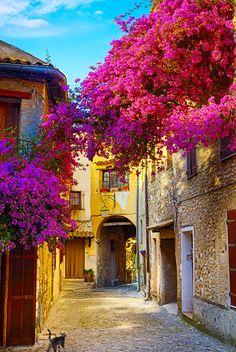 La Provence et ses jolies ruelles fleuries au printemps. Retrouvez toutes les plus belles villes de Provence en cliquant sur la photo