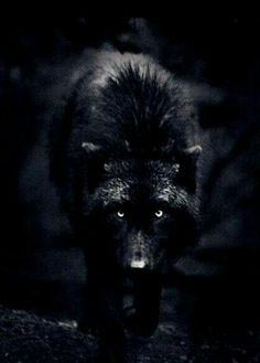 gallery for black wolf iphone wallpaper
