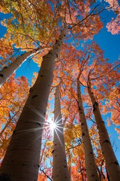 A few stands of aspen trees in Utah& Little Cottonwood Canyon vary in autumn from bright yellow, through a rich orange, to a glowing red. Back lit, they turn to fire. Beautiful World, Beautiful Images, Autumn Scenes, Fall Pictures, Autumn Photography, Amazing Nature, Belle Photo, Mother Nature, Flower Power