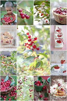 Collage Cherries by Cintamani (maybe we should use to wallpaper our offices?