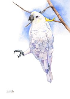 Cockatoo watercolour painting Australian bird by LouiseDeMasi