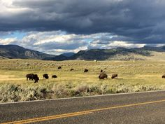 Beautiful cloud@Yellowstone