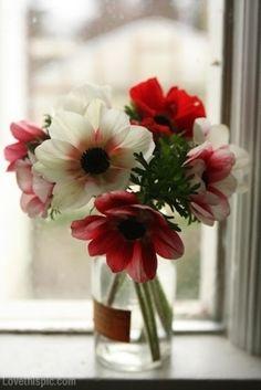 Jar of Daisies red flowers white jar vase daisy