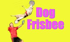 Dog Frisbee: Tips and Tricks