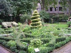 Lemon Verbena Lady's Herb Garden