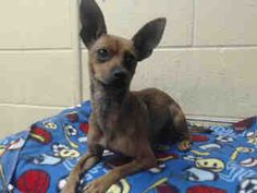 County of Los Angeles Department of Animal Care and Control-Our Animals-Our Animals Search Detail