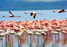 Tanzania, Lake Manyara National Park  www.smartlinkssafaris.com
