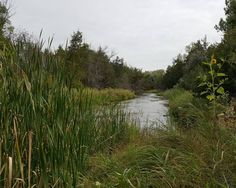 Maxwell South Channel Recreation and Home-Hunting land for sale in Nebraska
