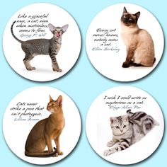 Popular British domestic cars printed onto genuine pulpwood beer mats. Includes four different cats on a round, 1200 micron thick beer mat. Beer Mats, Owning A Cat, Strike A Pose, Dog Cat, British, Popular, Cars, Printed, Nature