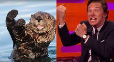 During an appearance on last Friday's episode of 'The Graham Norton Show', Benedict Cumberbatch took part in a series of otter impressions.
