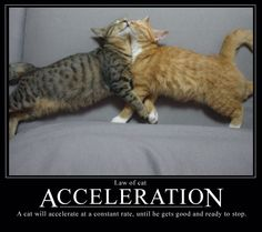Cat Law of Acceleration