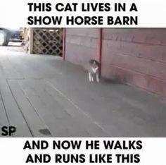 I am a... HORSE