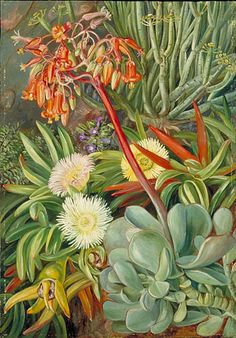 The Hottentot Fig and other Succulents from the Karroo