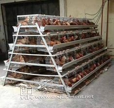 Factory 5000 chicken chicks for sale/battery layer broiler chicken cage Poultry Cage, Poultry House, Poultry Farming, Cheap Chicken Coops, Chicken Cages, Backyard Birds, Chickens Backyard, Chicken Shelter, Selling Eggs